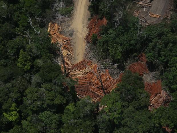 Organização monitorou região pouco mais de um mês (Foto: Lunae Parracho/Greenpeace)