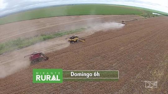 Veja os destaques deste domingo no Mirante Rural