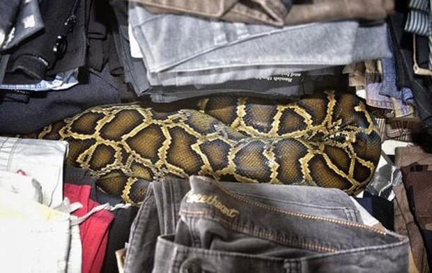 Píton de 2,5 metros enrolada no meio de roupas em mercado de pulgas  (Foto: Miami-Dade Fire Rescue)