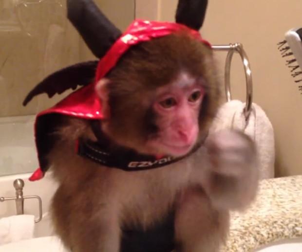O animal posou com fantasia de diabinho um dia antes do Dia das Bruxas (Foto: Reprodução)