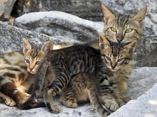 Foto de gata com filhotes mostra ilusão de ótica curiosa (Foto: Paul Hanna/Reuters)