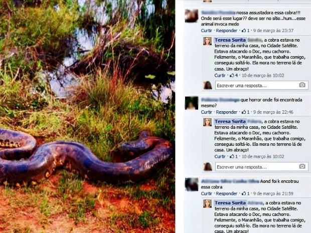 Imagem da cobra que atacou animal foi postada na rede social da prefeita de Boa Vista (Foto: Reprodução/Facebook)