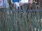 Paizão! Ricky Martin leva os filhos a zoológico em Sydney