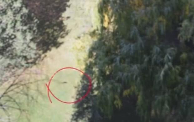 Após salto, roedor aparece correndo em gramado (Foto: Reprodução/LiveLeak/AppleMinded IVXX)