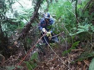 Foi preciso o uso de equipamentos de rapel para resgatar os animais (Foto: Bombeiros/Divulgação)
