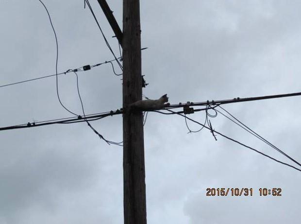 Gato escalou um poste, mas depois não conseguiu mais descer (Foto: Reprodução/Facebook/The Louisiana SPCA)
