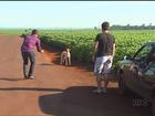 Cachorros que seguiram carro do IML no interior do Paraná são adotados