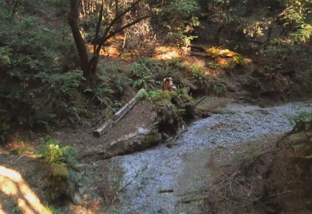 Drone registra casais mantendo relações sexuais em diferentes locais (Foto: Reprodução/Vimeo/GHOST+COW FILMS)