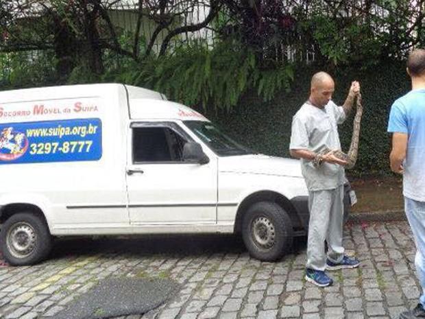 Equipe da Suipa realizou o resgate da cobra que estava em um poste de Laranjeiras, na Zona Sul do Rio (Foto: Luís Eduardo Castro/ Suipa)
