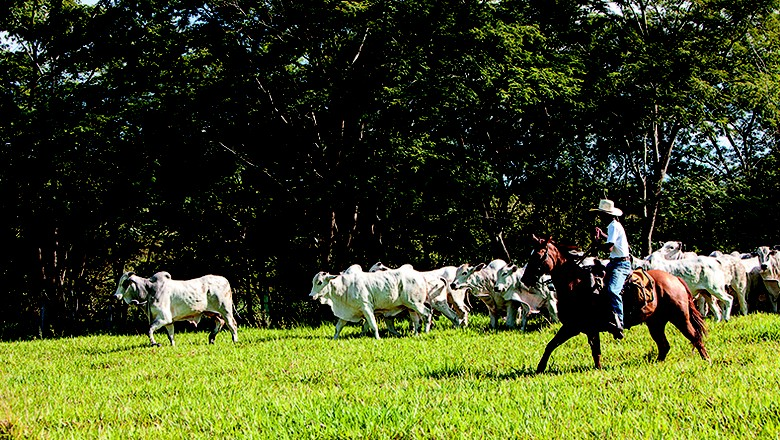 terra-boa-campea-fazenda-sustentavel-2014 (Foto: Marcelo Min/Ed. Globo)