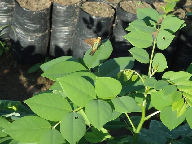 Mudas plantadas são de árvores frutíferas e com propriedades medicinais (Foto: Divulgação/Projeto 8 Verde)