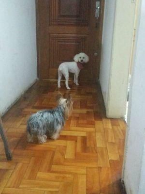 Cachorrinhos foram roubados dentro de carro (Foto: Arquivo pessoal)