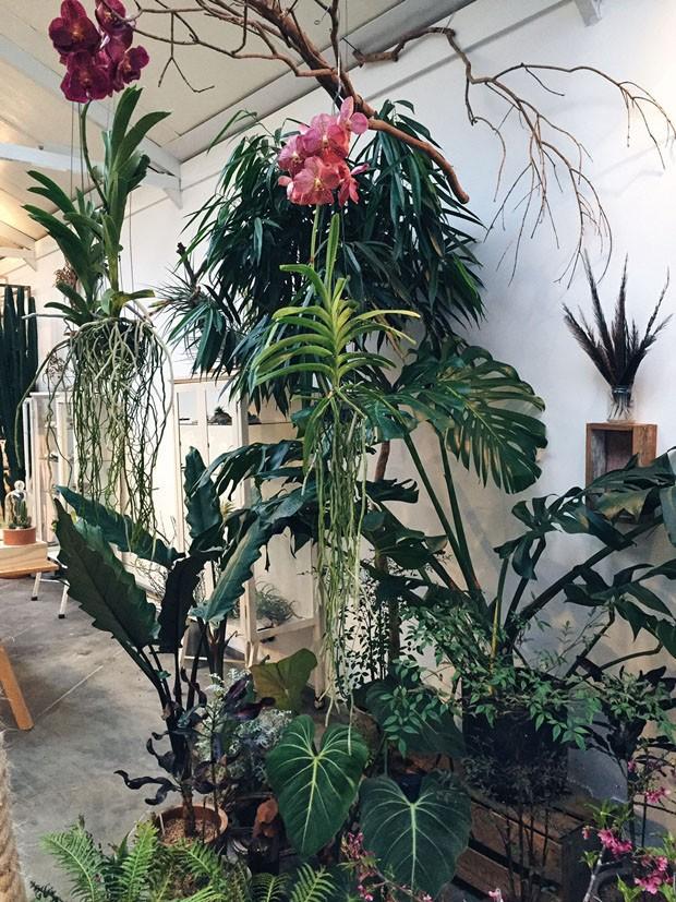 Vandas: como cuidar desse tipo de orquídea (Foto: Flo Atelier Botanico)