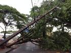 Chuva e vento forte causam estragos no norte e no noroeste do Paraná