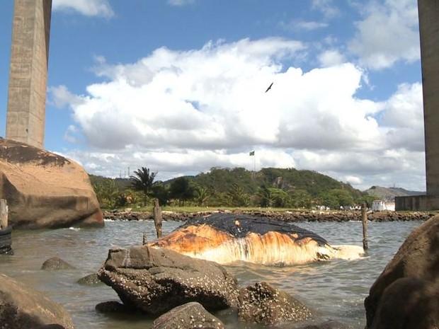 Carcaça de baleia segue encalhada em Vila Velha (Foto: Reprodução/ TV Gazeta)