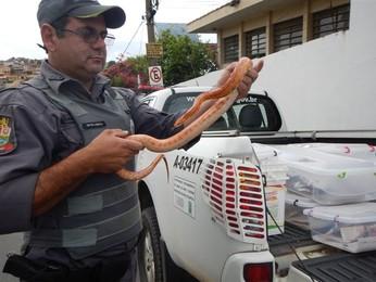 . (Divulgação/Polícia Ambiental)