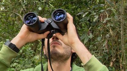 Expedição em busca de ave rara