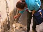 Mutirão contra o Aedes aegypti reúne 31 municípios da região de São Carlos
