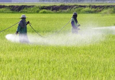 pesquisa_agrotoxicos (Foto: Shutterstock)