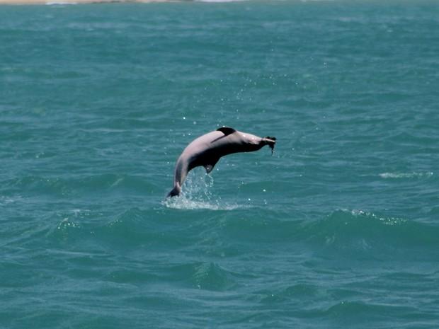 Estudo teve a coleta de dados realizada em Baía Formosa, litoral sul do RN (Foto: Gustavo Toledo)