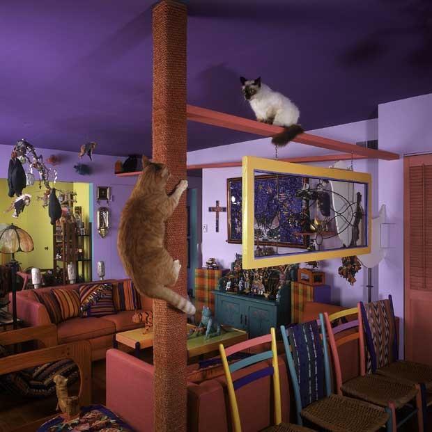 Condomínio de gatos tem túneis, rampas, escadas em espiral, áreas de descanso e vistas panorâmicas. (Foto: Cortesia Bob Walker/ AP)