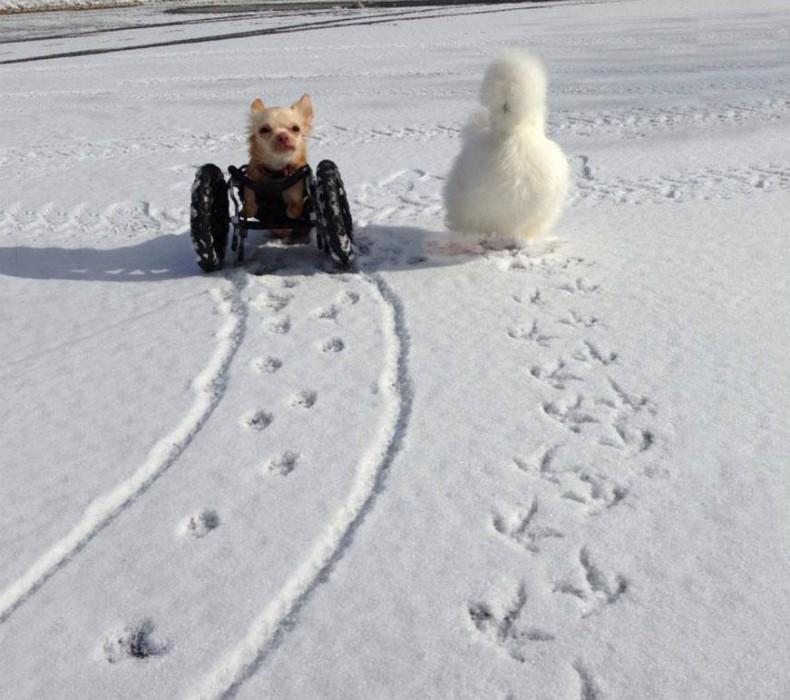 amizade03_planeta_bicho (Foto: Divulgação/Duluth Animal Hospital)