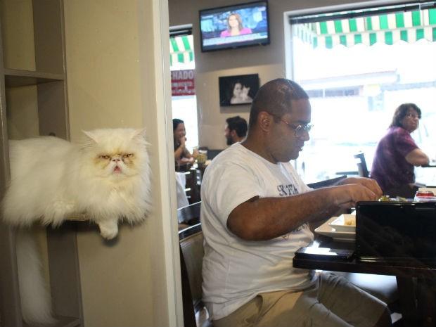 Cafeteria tem uma espécie de aquário onde as pessoas podem observar os bichinhos (Foto: Camila Forti/G1)