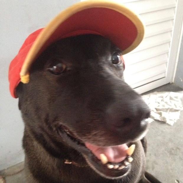 Função de Negão é atrair clientes e ele faz isso como ninguém, segundo dona; cachorro foi adotado e virou funcionário de posto de combustíveis (Foto: Sabrina Plannerer/Arquivo Pessoal)