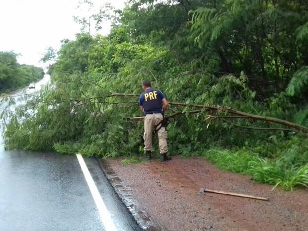 PRF alerta para queda de árvores ocasionada pelas fortes chuvas (Foto: Divulgação/PRF TO)