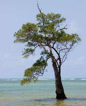 Praia da Conceição, na Bahia (Foto: Arquivo pessoal)