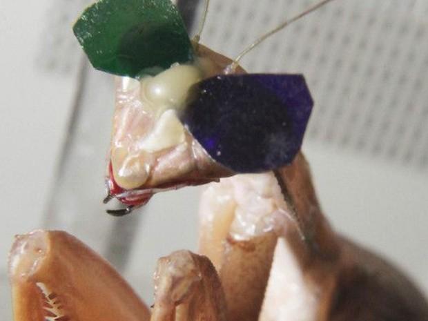 Óculos de cera de abelha foram desenvolvidos especialmente para o estudo (Foto: BBC/Universidade de Newcastle)