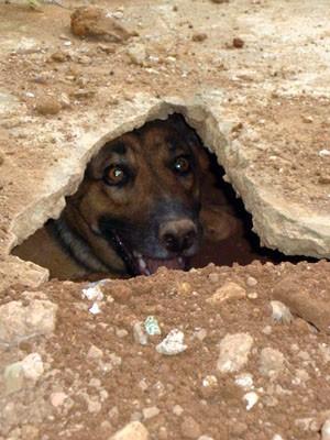 'Cachorra-tatu' fez buraco para 'viver' em Pouso Alegre (Foto: Daniela Ayres / Arquivo pessoal)
