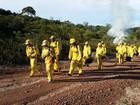 Governo de Roraima abre inscrições para contratação de 150 brigadistas