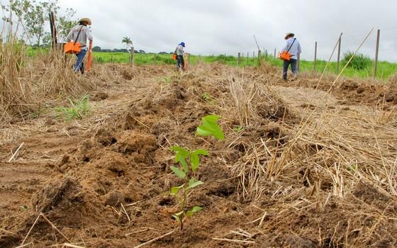 Recuperação de áreas de preservação permanente (Foto: Divulgação - Pecsa)