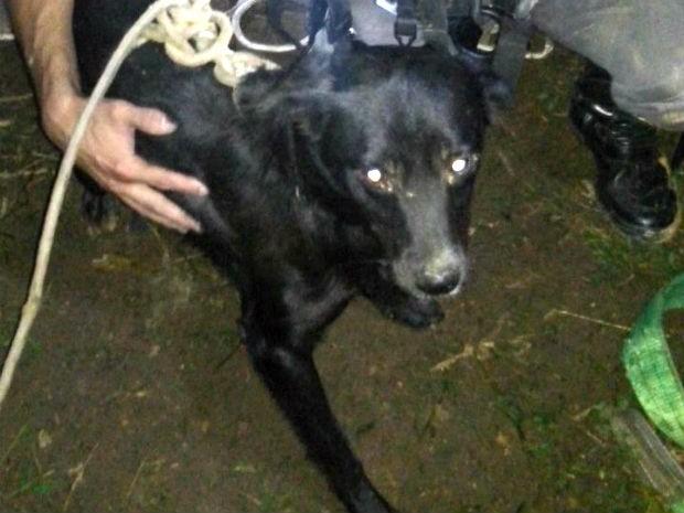 Bombeiros resgatam cachorros em buraco de 45 m em Várzea Paulista (Foto: Divulgação / Corpo de Bombeiros)