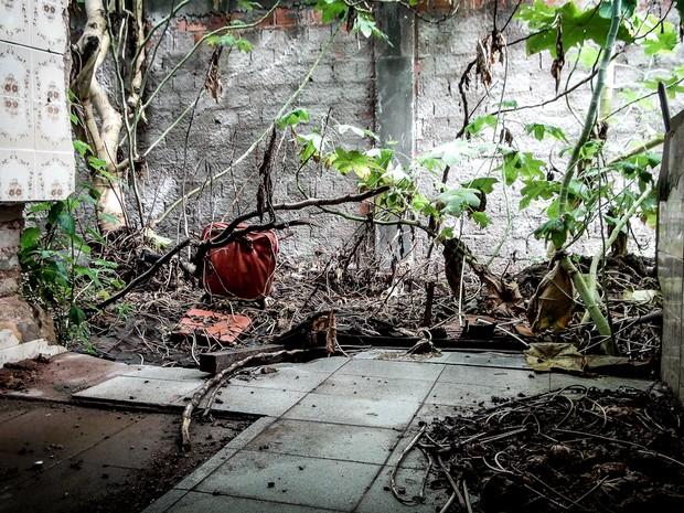 Plantas tomam conta de cômodo de casa destruído após acidente (Foto: Lucas Leite/ G1)