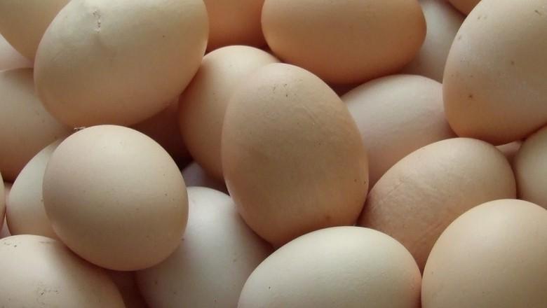 ovos-aves-granja (Foto: tripleigrek/CCommons)
