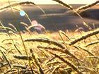 Geada e graus negativos preocupam agricultores e causam prejuízos no RS