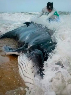 Baleia Jubarte foi achada na praia de Tabatinga, no litoral Sul do estado (Foto: Françoise Lima/G1)