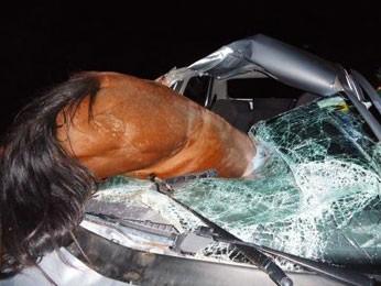 Cavalo vai parar dentro de carro após colisão em rodovia no Agreste de PE (Foto: Foto: Cristiano Gustavo de Andrade /VC no G1)