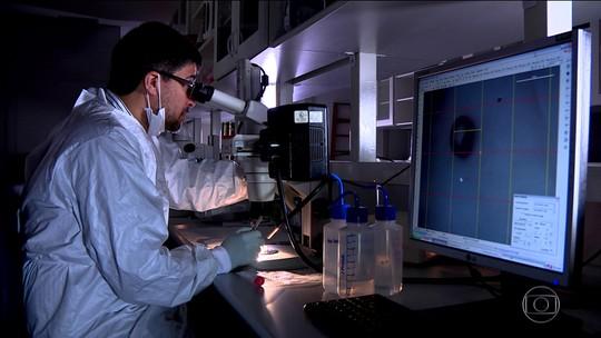 Pesquisadores reproduzem em laboratório efeitos da zika na gestação