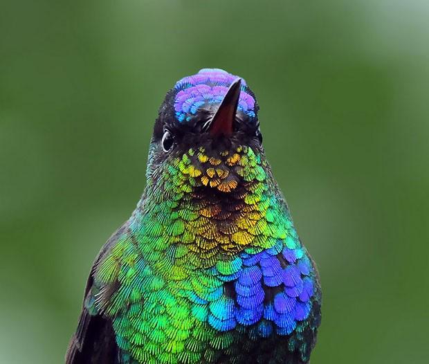 20 beija-flores (Foto: Mauro Roman / reprodução)