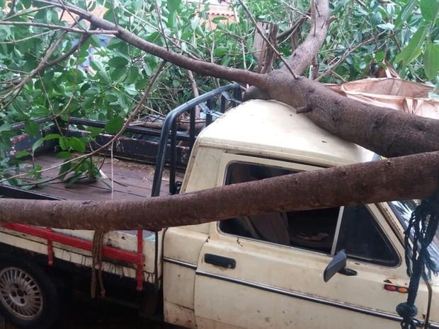 Uma das árvores caiu em cima de uma caminhonete (Foto:  Rafael Honorato/Rádio Assunção)