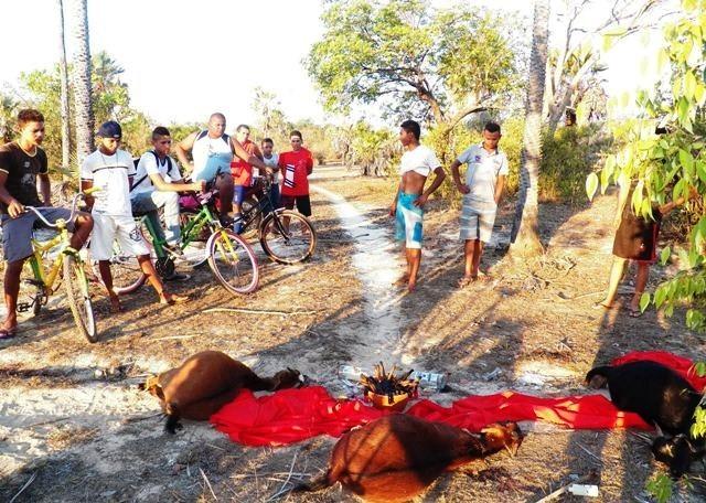 Objetos e animais mortos foram encontrados pela população de Barras (Foto: Barras Virtual)