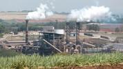 Veja como é feito o etanol; cana é esmagada 5 vezes