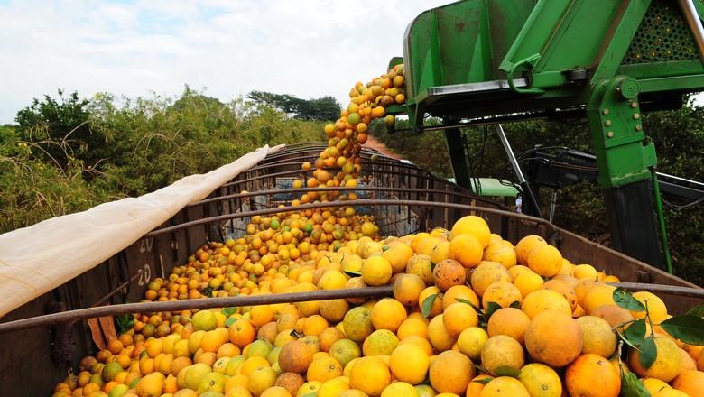 laranja_colheita (Foto: Ernesto de Souza/Ed. Globo)