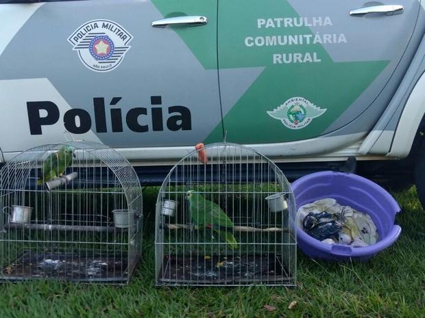 Aves que eram mantidas em cativeiro foram resgatadas em Euclides da Cunha Paulista (Foto: Cedida/Polícia Militar Ambiental)
