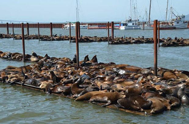 Objetivo é afugentar leões-marinhos de porto no Oregon (Foto: Reprodução/YouTube/USA Today)