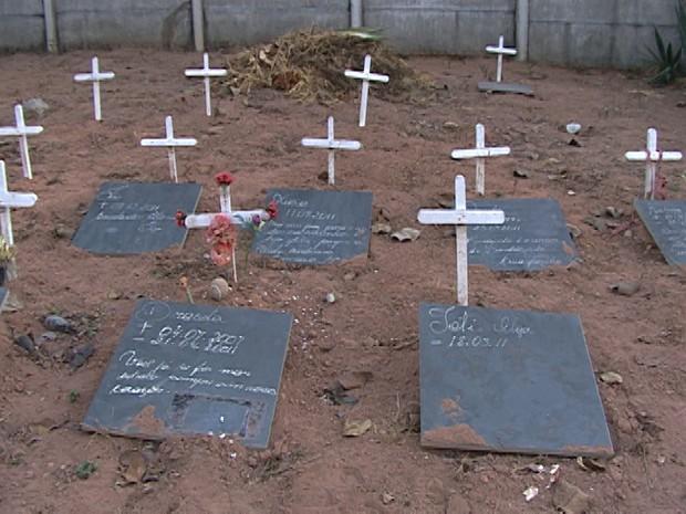 Cemitério para cães e gatos em Divinópolis (Foto: Reprodução/TV Integração)