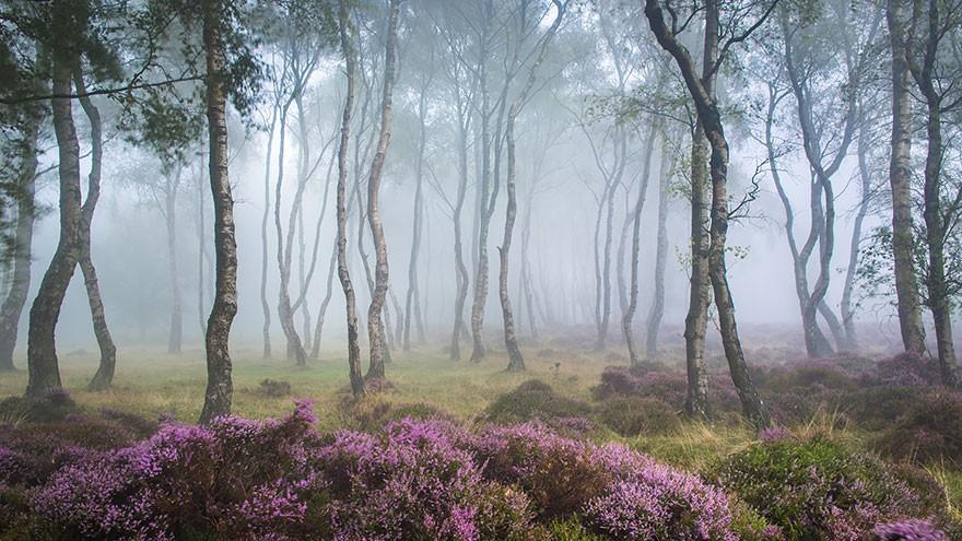 Fotógrafos e florestas (Foto: James Mills / Divulgação)